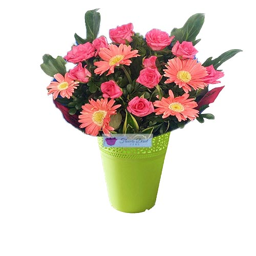 Flowers in Cebu City is pink roses along with pink gerbera flowers in a green vase