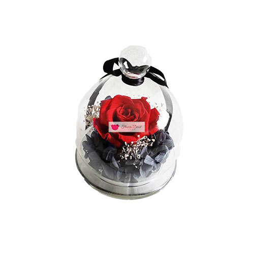 Forever Preserved Rose Cebu Real Red Rose that has been preserved to last forever, comes in a glass dome.