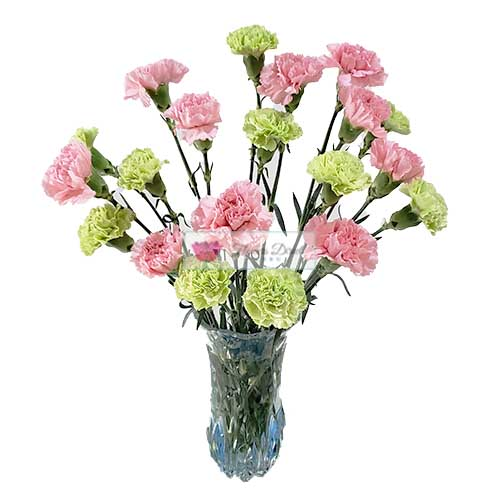 Carnation Cebu in a Vase 20 colored carnations in a clear glass vase. When ordering choose from any two combinations from pink, green or red.