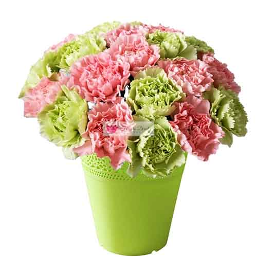 Pink Green Carnations Cebu 18-20 Pink and green carnation in a limited edition reusable plastic flower pot.