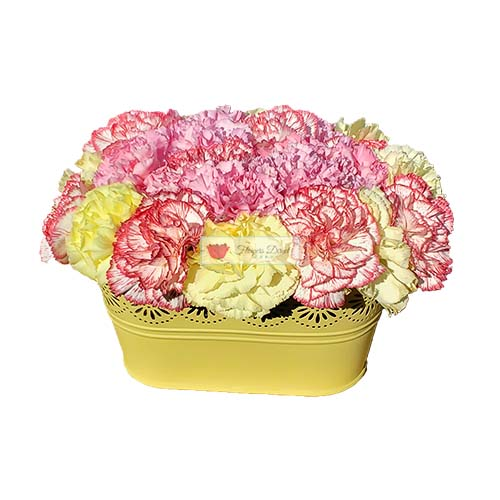 Carnation Flowers Box Cebu