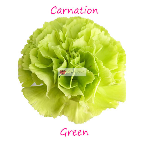 green carnation flowers direct cebu