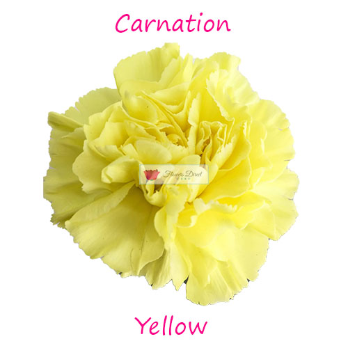 yellow carnation flowers direct cebu